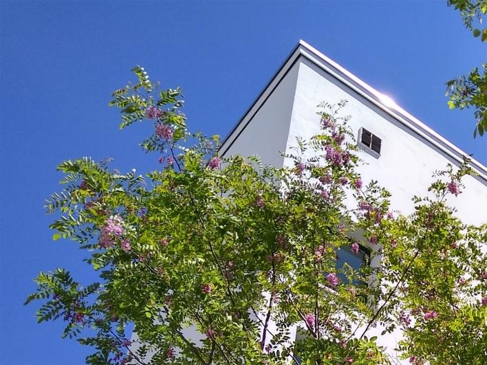 Außenansicht mit Baum